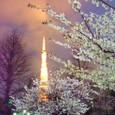 東京タワーと夜桜