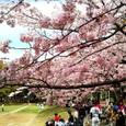 桜と草野球