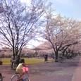 3月29日新小岩公園
