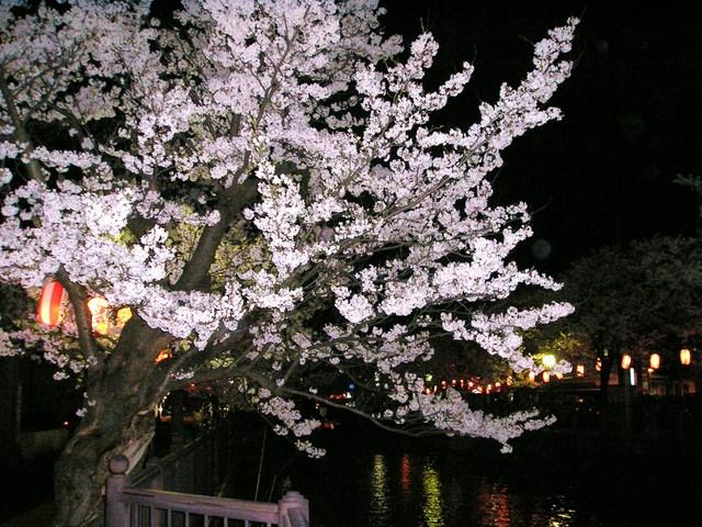 4月11日・長岡の夜桜