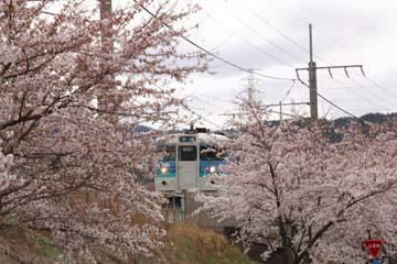 桜と列車2