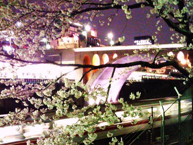 夜桜その2・聖橋