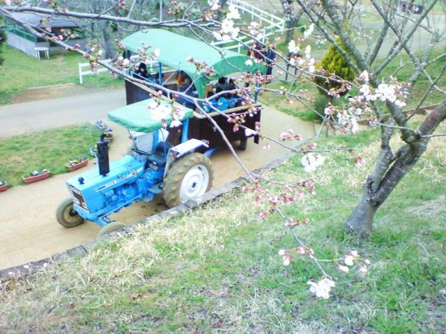 3月30日成田ゆめ牧場