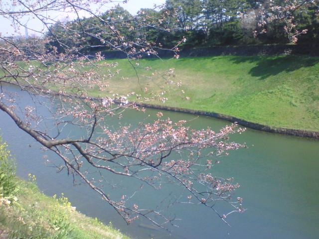 3月25日:千鳥ヶ淵
