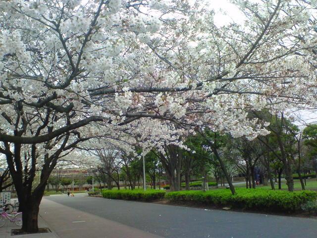 3/31・新小岩公園